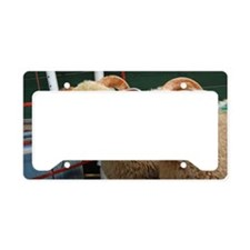 Inquisitive horned ewe lambs License Plate Holder
