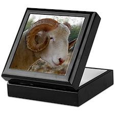 Horned Dorset Ram Headstudy Keepsake Box