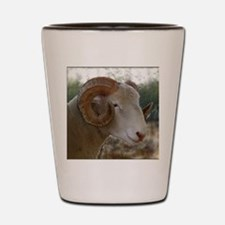 Horned Dorset Ram Headstudy Shot Glass