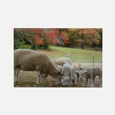 Fall Sheep Rectangle Magnet