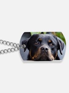 Rottweiler Dog Dog Tags