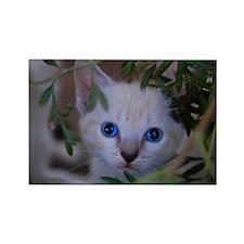 Kitten in the brush Rectangle Magnet