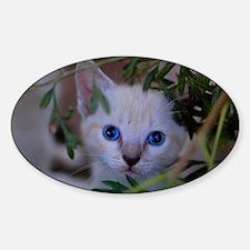 Kitten in the brush Decal