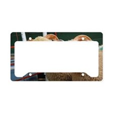 Inquisitive ewe lambs Large License Plate Holder