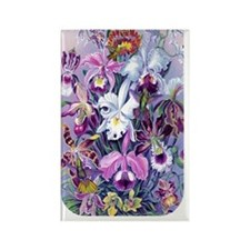 NOOK SLEEVE Cattleya Hummers Rectangle Magnet
