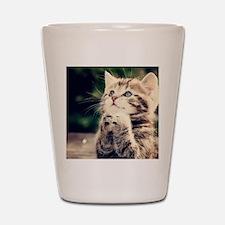 Cat Praying Shot Glass