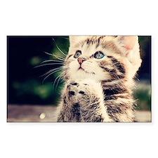 Cat Praying Decal