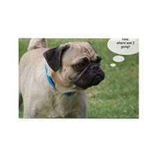 Pug, Now Where Was I Going Birthd Rectangle Magnet