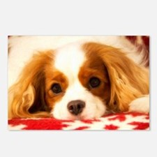 Profile Of A Cavalier Kin Postcards (Package of 8)
