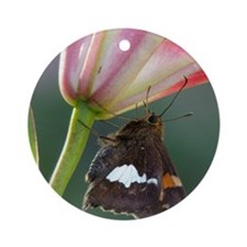 Butterfly & Lily Round Ornament