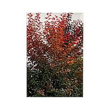 Autumn Burning Rectangle Magnet