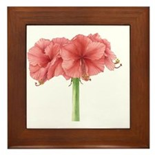 Amaryllis Framed Tile