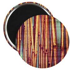Reeds Magnet