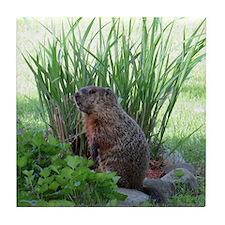 Groundhog in garden Tile Coaster