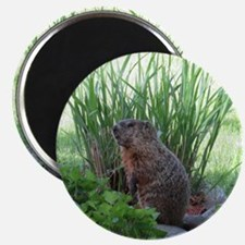Groundhog in garden Magnet