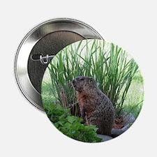 """Groundhog in garden 2.25"""" Button"""