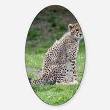 Cheetah 001 Sticker (Oval)