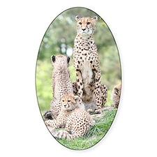 Cheetah 003 Decal