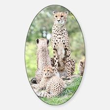 Cheetah 003 Sticker (Oval)