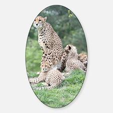 Cheetah 004 Sticker (Oval)