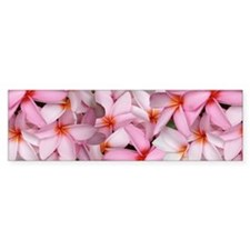 Hawaii Pink Plumerias Bumper Sticker