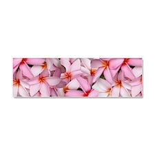 Hawaii Pink Plumerias Car Magnet 10 x 3