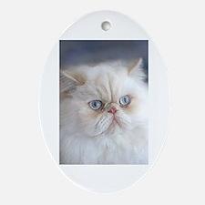 Cute Persian cat Oval Ornament