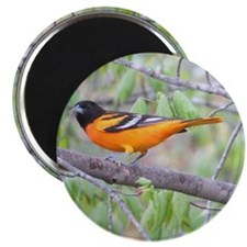 Northern Oriole Magnet