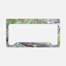 Northern Oriole License Plate Holder
