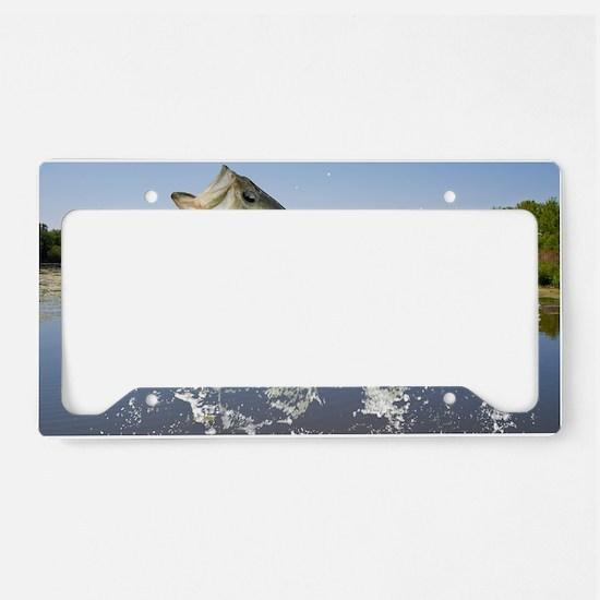 Miss Bass License Plate Holder