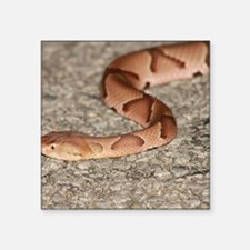 "Copperhead Square Sticker 3"" x 3"""