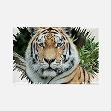 Tiger 001 Rectangle Magnet