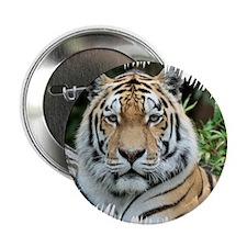"Tiger 001 2.25"" Button"