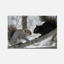 Black Squirrel Rectangle Magnet