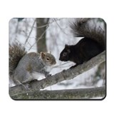 Black squirrel Mouse Pads