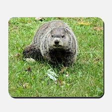 Groundhog eating Mousepad