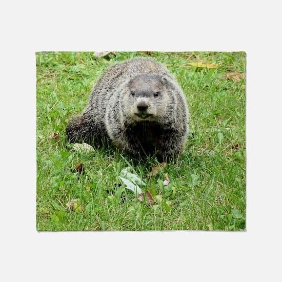 Groundhog eating Throw Blanket
