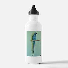 Indian Ringneck Water Bottle