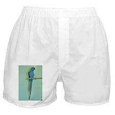 Indian Ringneck Boxer Shorts