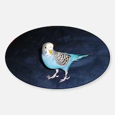 parakeet Decal