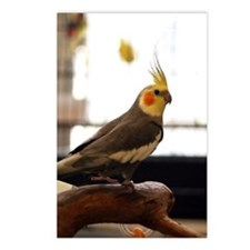 cockatiel Postcards (Package of 8)