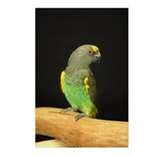 myers parrot Postcards (Package of 8)