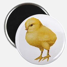 Vintage Easter Chick Magnet