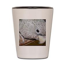 cape parrot Shot Glass