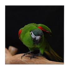 hahn's macaw Tile Coaster