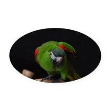 hahn's macaw Oval Car Magnet