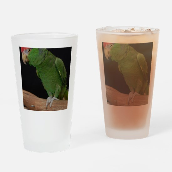 mexican redhead amazon Drinking Glass