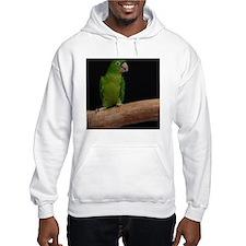 Green conure Hoodie
