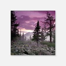 "Beautiful Forest Landscape Square Sticker 3"" x 3"""
