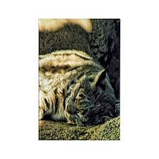 Bobcat Rectangle Magnet